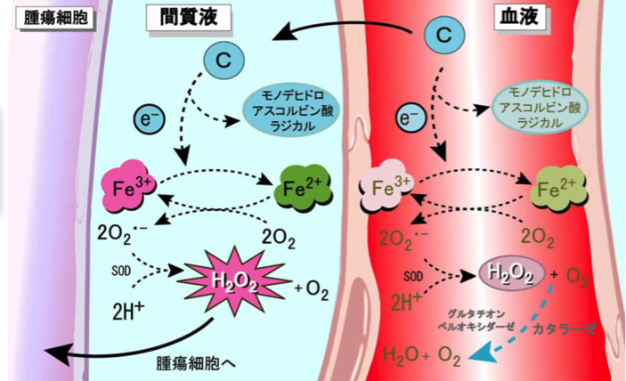 天野晶子、石神昭人:ビタミンCの抗がん作用. ビタミン 83 24-26(2009)